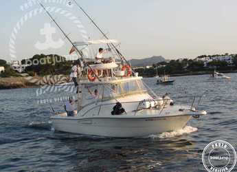 Rent a motorboat Pursuit Offshore 3000 in Port of Pollensa, Pollensa